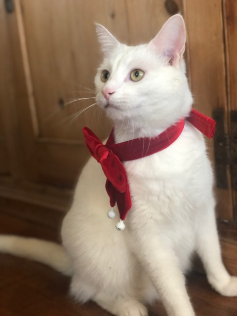 christmas bow tie alfie 2019